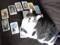cat and Tarot cards