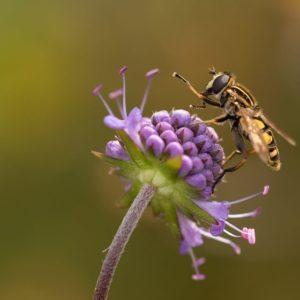 photo of bee on purple flow4er