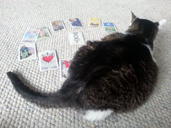 photo of cat sitting on Tarot card spread