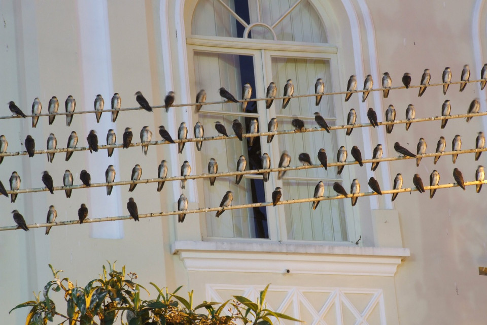 photo of birds on wires