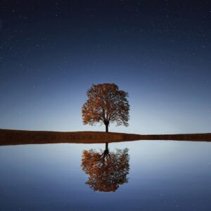 photo of tree reflected in water