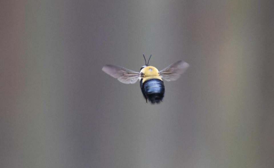 photo of a bee in flight