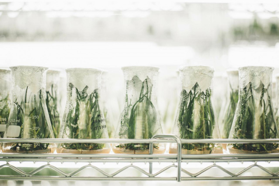 photo of three rows of clear glass beakers with green shoots inside them, with a stainless steel railing in front